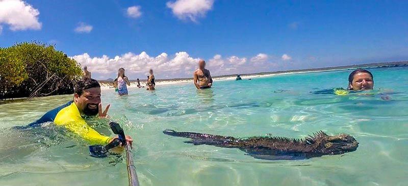 Nadar com iguanas marinhas é com certeza uma experiência incrível!